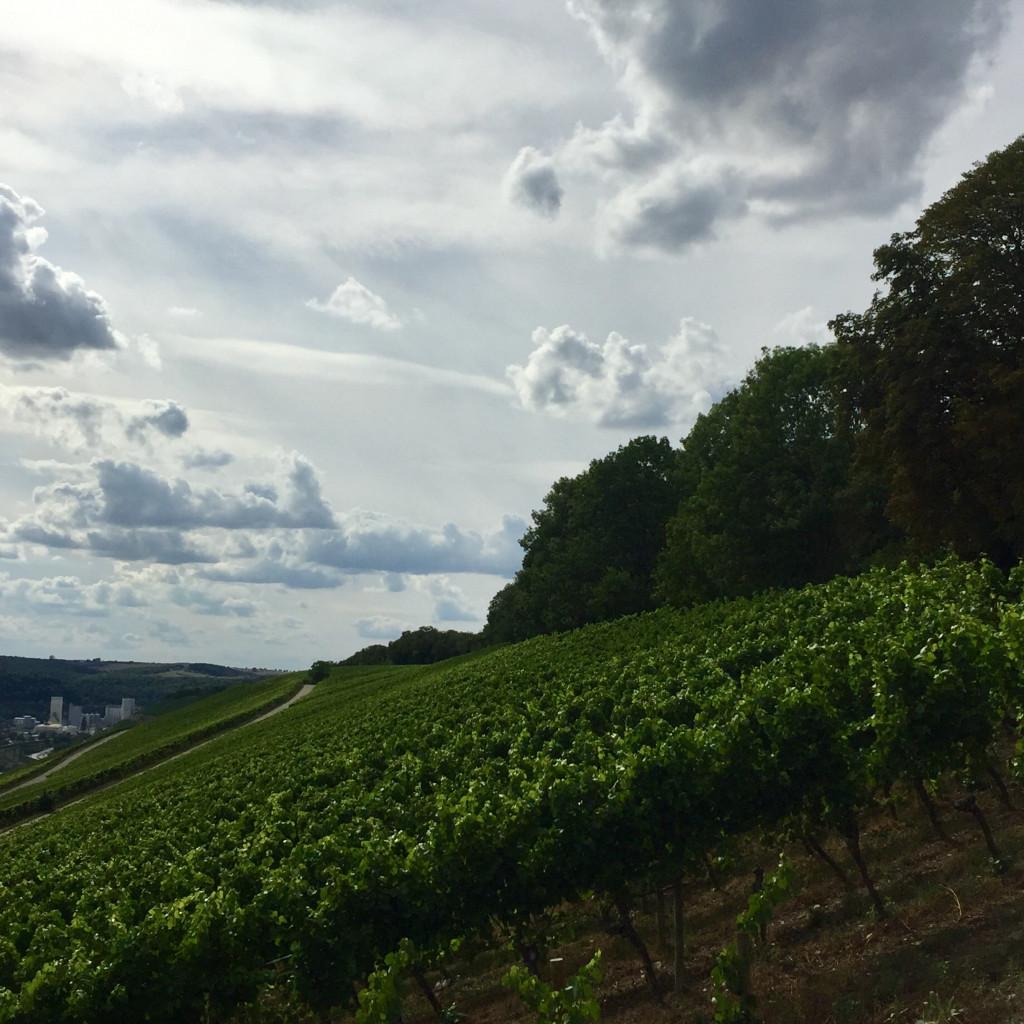 Weinlage Würzburger Stein