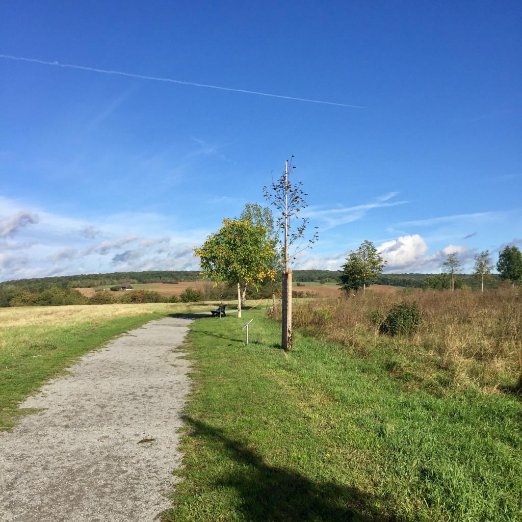 Weg der Jahresbäume