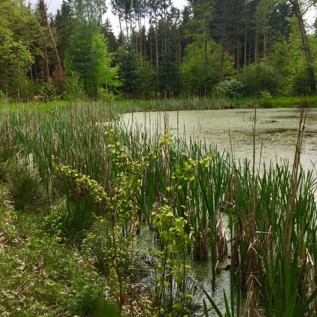 Weidingsee