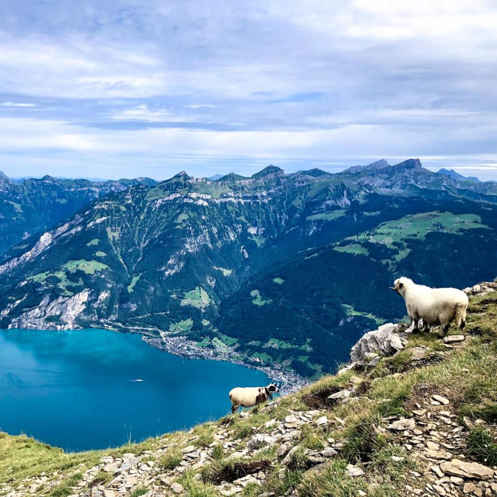 alpenüberquerung_schweiz_trekking