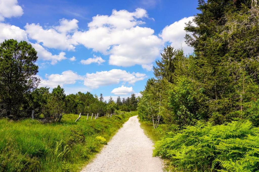 nationalpark_westweg_trekking_schwarzwald