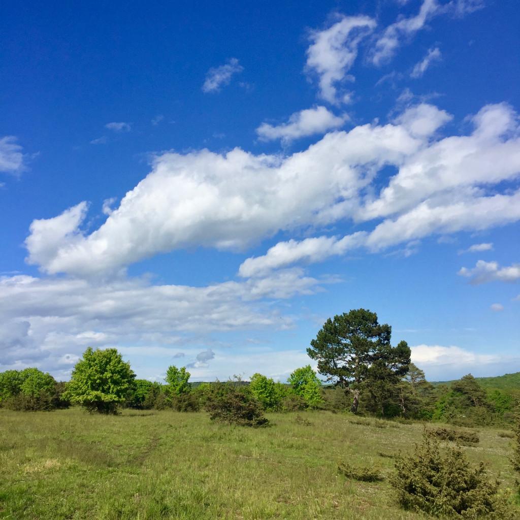 naturschutzgebiet_ruine_homburg